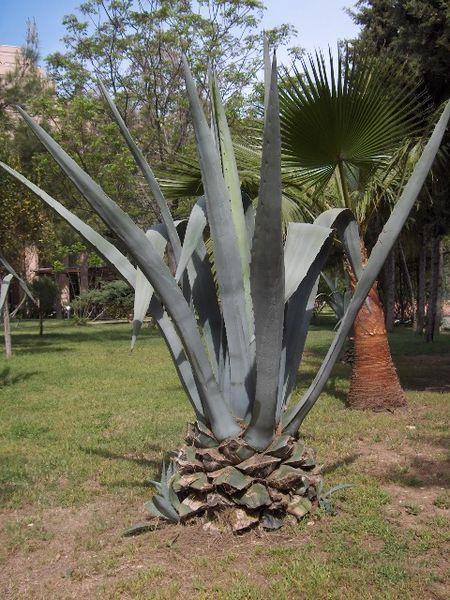 Vendita piante grasse giardinaggio piante e fiori da giardino for Piante grasse rare