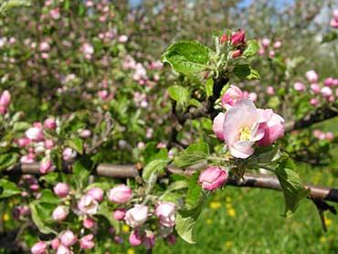 Piante e fiori da giardino piante grasse giardinaggio for Giardinaggio e fiori