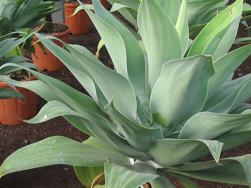Gardenflora trio piante grasse giardinaggio piante e for Piante grasse ornamentali