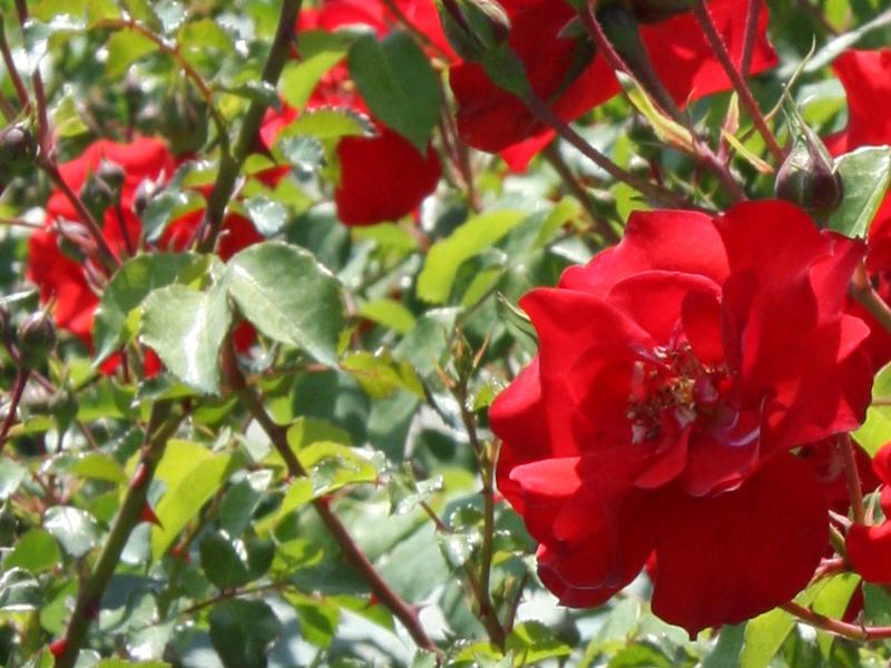 Produzione Piante Da Frutto : Gardenflora trio piante grasse giardinaggio e