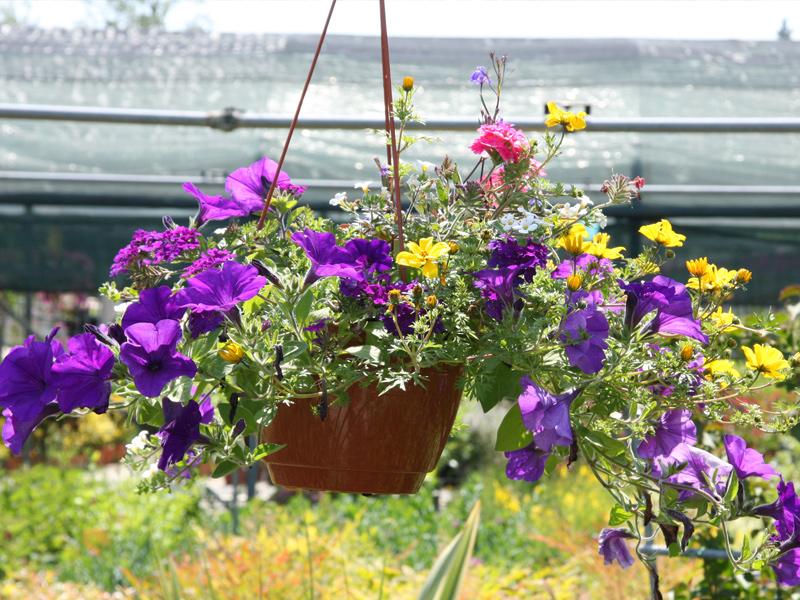 Piante E Fiori Da Giardino.Piante E Fiori Da Giardino Piante Grasse Giardianggio Vivaio Di